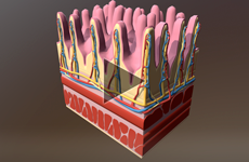 3D-MODELS | NCEA LEVEL 2 BIOLOGY - Biozone